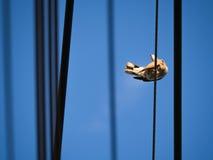 Движение голубя Стоковое Фото