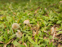 Движение гриба Стоковые Фото