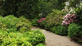 Движение камеры вдоль тропы, пурпурных, красных, белых цветков покрывая куст и деревья видеоматериал
