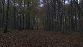 Движение камеры вдоль леса на осени сток-видео