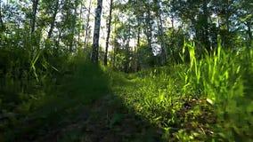 Движение камеры низкой к тропе видеоматериал