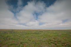 Движение облаков весной в части степи c Стоковые Фото
