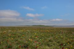 Движение облаков весной в части степи c Стоковая Фотография
