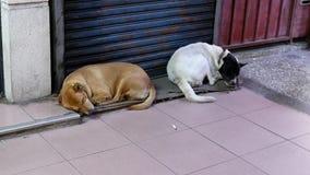 Движение собак покинутых помехами спит в угле оживленной улицы сток-видео