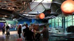 Движение людей sightseeing внутри аквариума Ванкувера видеоматериал