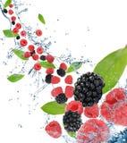 движение ягод свежее стоковая фотография
