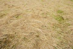 Двинутая трава Стоковое Фото