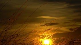 Двиньте вверх травы к небу