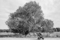 Двойная прогулочная коляска на пути луга Стоковые Изображения
