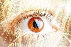 Двойная экспозиция глаза женщины стоковая фотография rf