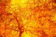 Двойная экспозиция предпосылки деревянных и желт-апельсина grunge Стоковое Изображение