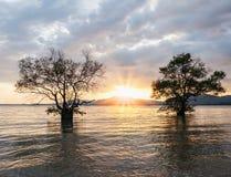 Двойное дерево в море с цветом захода солнца Стоковое Изображение
