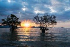 Двойное дерево в море с цветом захода солнца Стоковые Фотографии RF