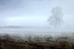 Двойное дерево в тумане утра Стоковые Изображения RF