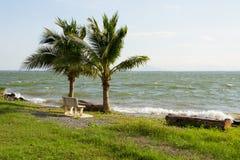 Двойное treealong кокоса резервуар воды Стоковые Изображения