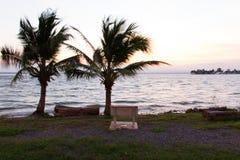 Двойное treealong кокоса резервуар воды Стоковые Фото