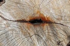 Двойной пень - деревянная текстура Стоковое фото RF
