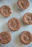 Двойные булочки обломока шоколада Стоковая Фотография RF