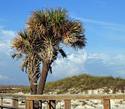 Двойные пальмы Стоковые Фото