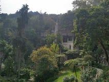 Дворец в дворце деревьев зеленого цвета sintra Стоковое Изображение