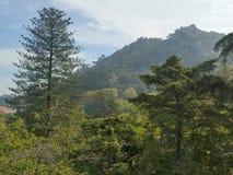 Дворец в дворце деревьев зеленого цвета sintra Стоковая Фотография RF