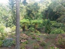 Дворец в дворце деревьев зеленого цвета sintra Стоковые Фотографии RF