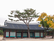 Дворец Changdeokgung Стоковое Фото