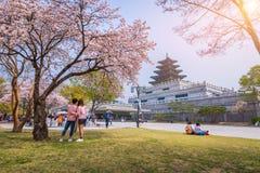 Дворец Gyeongbokgung с перемещением Кореи, 10-ое апреля 2016 вишневого цвета весной в Сеуле, Южной Корее Стоковое фото RF
