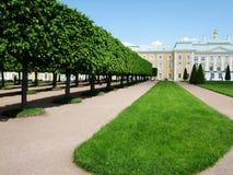 Дворец Petergof окруженный деревьями стоковые фото