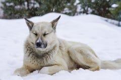 Дворняжка в зиме, снег сидит и горюет, приятельство Стоковые Фотографии RF