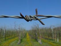 Двор вина обеспеченный с колючей проволокой Стоковые Фотографии RF