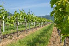 Двор вина Стоковое Изображение RF