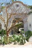 двор кактуса стоковая фотография rf