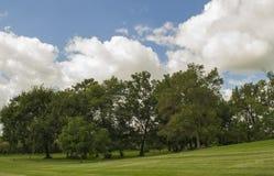 Двор страны Айовы с группой в составе деревья Стоковые Фотографии RF