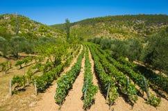 Двор Хорватия вина Стоковое Изображение RF