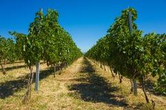 Двор Хорватия вина Стоковое Изображение
