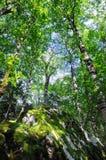 Девственный лес стоковые изображения rf