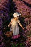 Девушка лаванды стоковая фотография rf