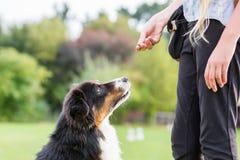Девушка дает собаке обслуживание Стоковые Изображения