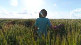 Девушка бежит вдоль зеленого поля пшеницы акции видеоматериалы