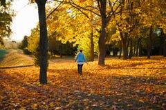 Девушка бежит в парк осени Свет идущего бегуна женщины солнечный яркий на предпосылке парка осени Девушка стоковое фото