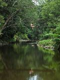Девушка ботаника азиатская уча мероприятия на свежем воздухе приключения с образом жизни в тропическом лесе стоковые изображения