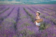 Девушка брюнет в соломенной шляпе держа корзину с лавандой Девушка брюнет с 2 оплетками в поле лаванды Милая девушка внутри Стоковое Фото