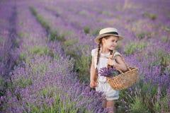 Девушка брюнет в соломенной шляпе держа корзину с лавандой Девушка брюнет с 2 оплетками в поле лаванды Милая девушка внутри Стоковые Фото