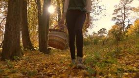 Девушка брюнет идя через древесины осени держа корзину пикника день солнечный видео steadicam 4K видеоматериал