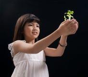 девушка вручает меньший завод Стоковые Изображения