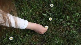 Девушка выбирая предыдущие цветки весны акции видеоматериалы
