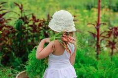 Девушка вытягивает морковь от сада Стоковое Изображение