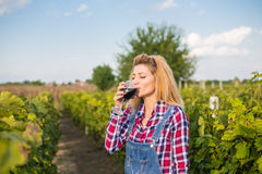 Девушка в винограднике стоковая фотография rf