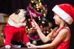 Девушка в костюме Санта Клауса дает мопса для того чтобы вылизать тросточку конфеты около дерева стоковая фотография rf